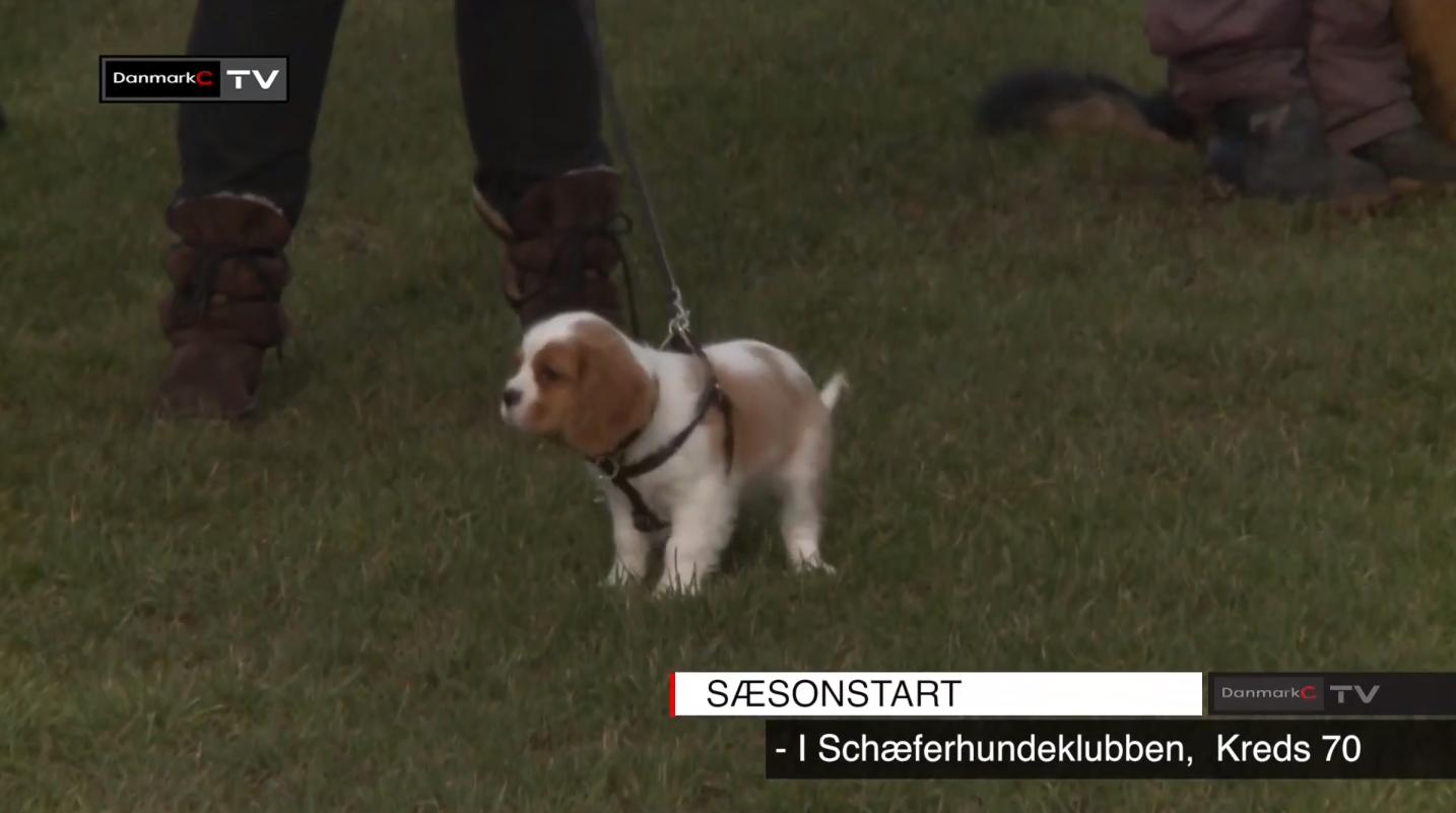 Scæferhundeklub
