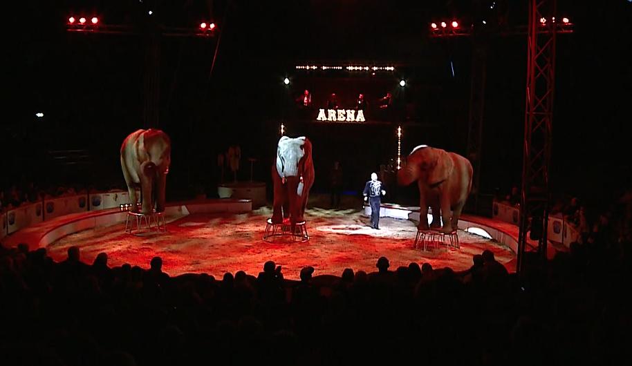Cirkus Arena besøgte Fredericia – VIND BILLETTER!