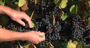 vinen-dag-vinbonden1