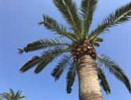 palme ferie sol sommer