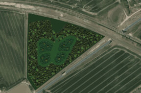 I Fredericia bliver Danmarks største sommerfugleskov plantet i samarbejd…