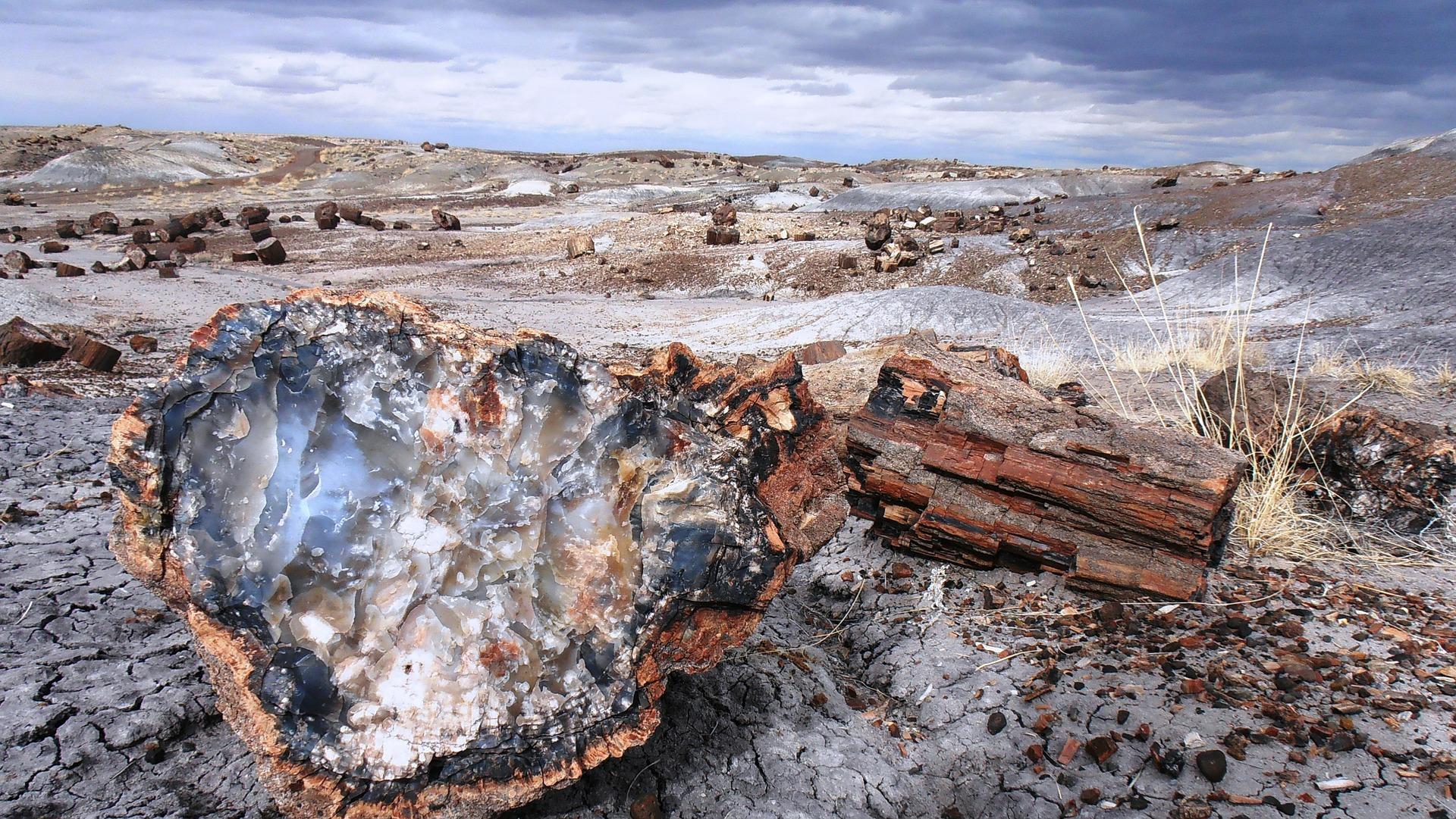 Bror arvede fossilsamling – nu er den overdraget til Naturcentret på Trelde Næs